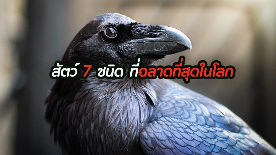 สัตว์ 7 ชนิด ที่ฉลาดที่สุดในโลก