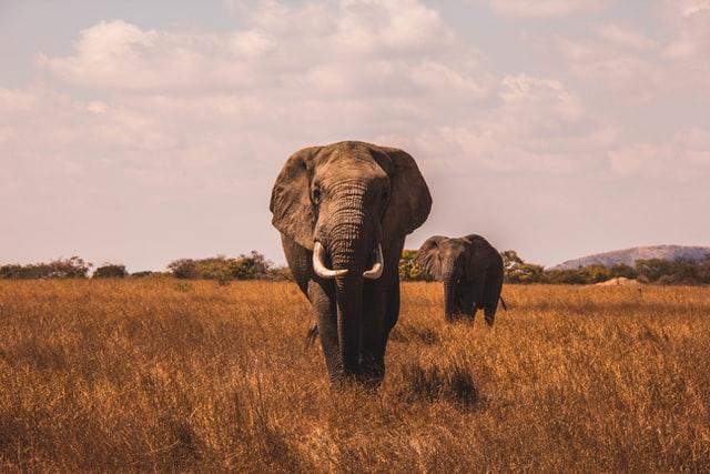 รวมสัตว์ 11 ชนิดที่คือที่สุดของโลก