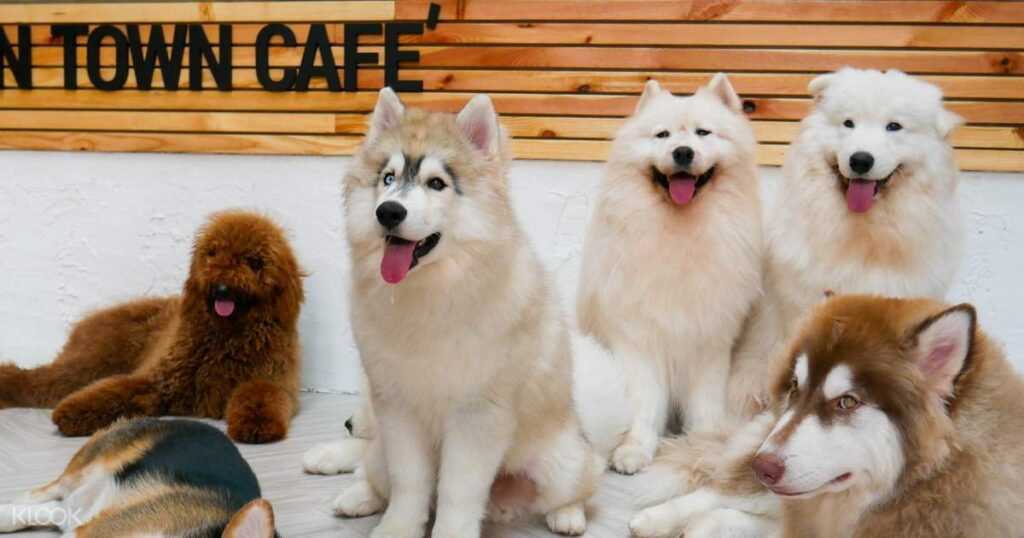 Dog in Town Cafe